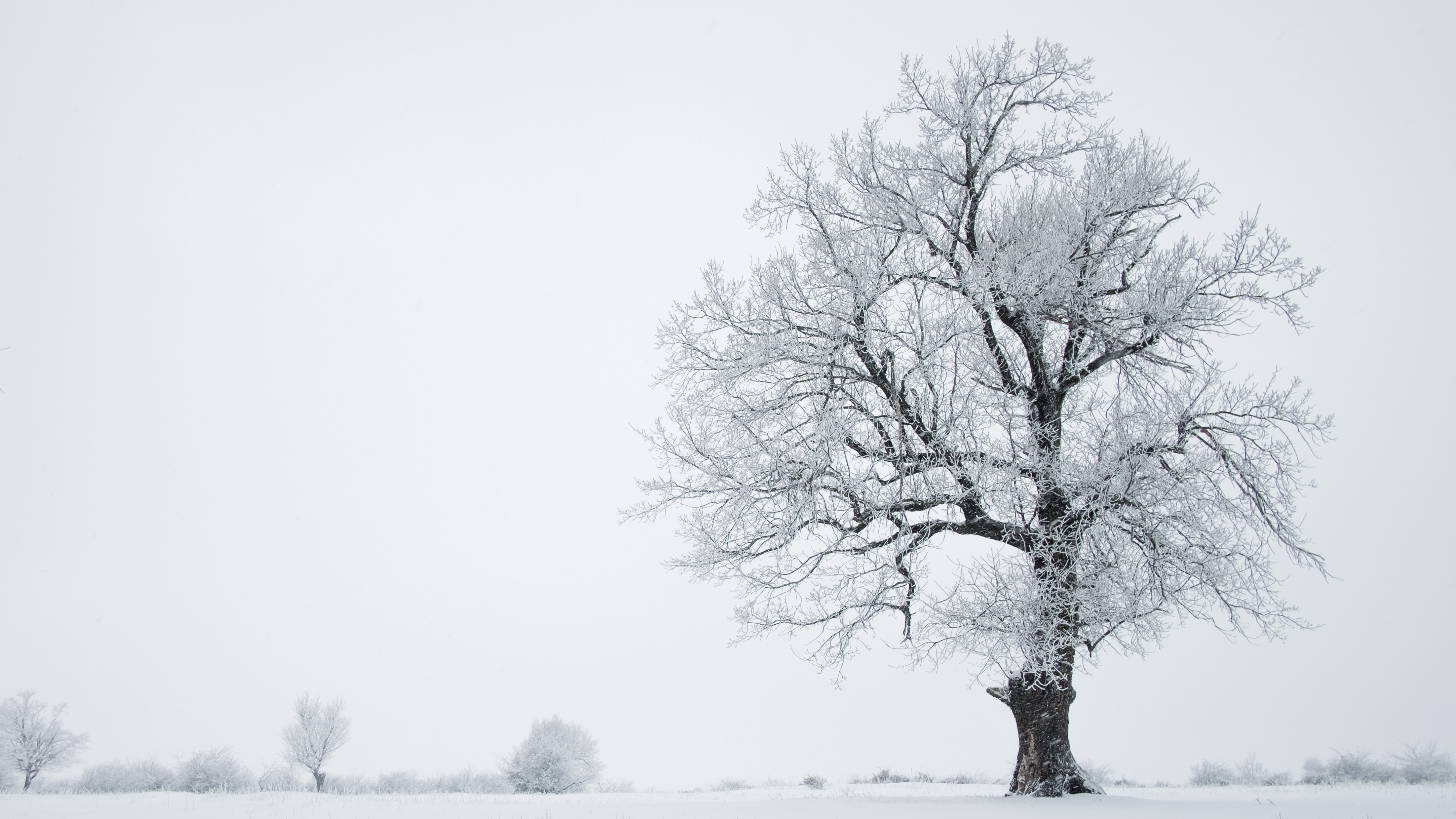 Reasons to love winter   Photo by Lucian Andrei on Unsplash