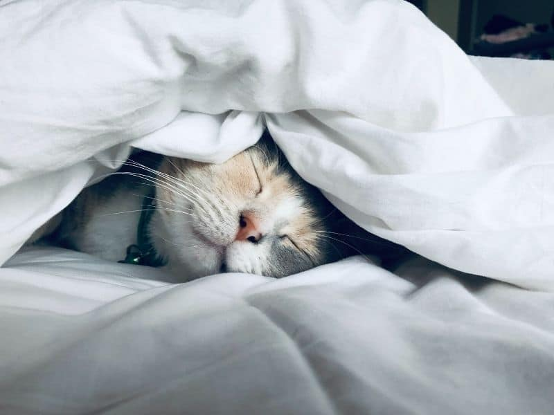 7 daily habits to improve your life - sleeping cat - Photo by Kate Stone Matheson on Unsplash