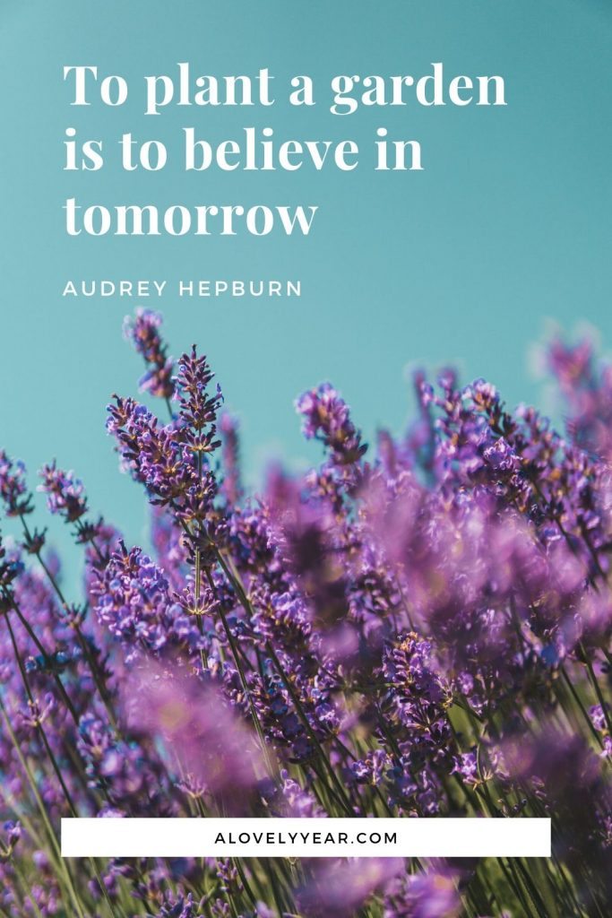 To plant a garden is to believe in tomorrow.– Audrey Hepburn