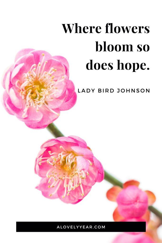 Where flowers bloom so does hope. - Lady Bird Johnson