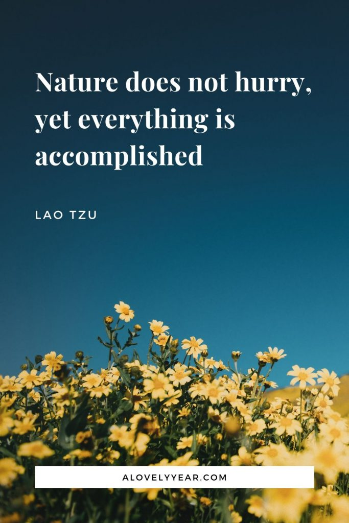 Nature does not hurry, yet everything is accomplished. - Lao Tzu
