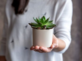 woman holding house plant in her hand